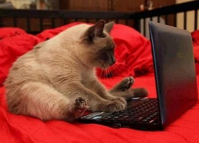 СБК Банк на диване интернет сервис. Обслуживание клиентов онлайн