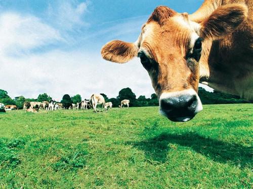 Инвестировать сельское хозяйство животноводство